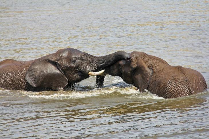 elephants-1221577_1280.jpg